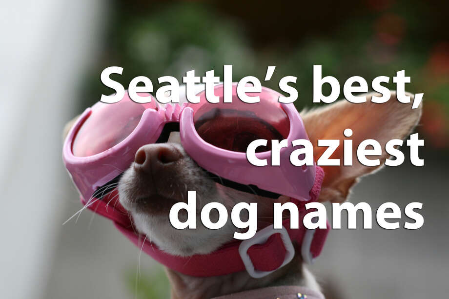 We combed through Seattle Animal Shelter pet licensing data to find some of the most, let's say, unique names registered in the city. Check out our favorites. Photo: Seattlepi.com File