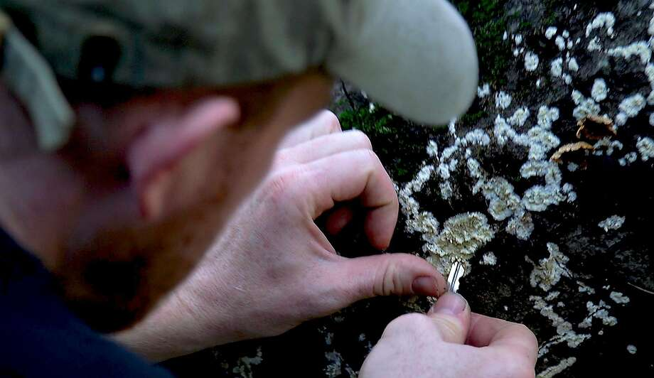Self-taught mycologist Alan Rockefeller removes fungi samples from a log on the Berkeley Fire Trails in Berkeley. Photo: Nani Walker / Special To The Chronicle