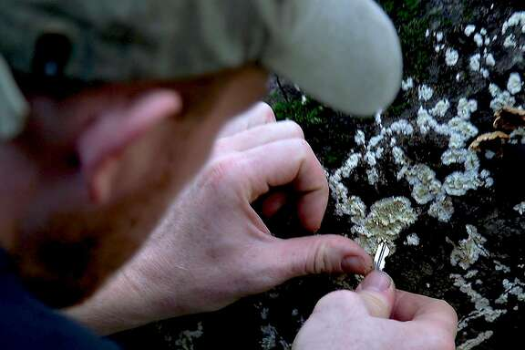 Self-taught mycologist Alan Rockefeller removes fungi samples from a log on the Berkeley Fire Trails in Berkeley, California.