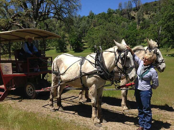 Anne Garner, owner of Eleven Roses Ranch in Lake County, with two of the mules that take visitors on wagon rides.