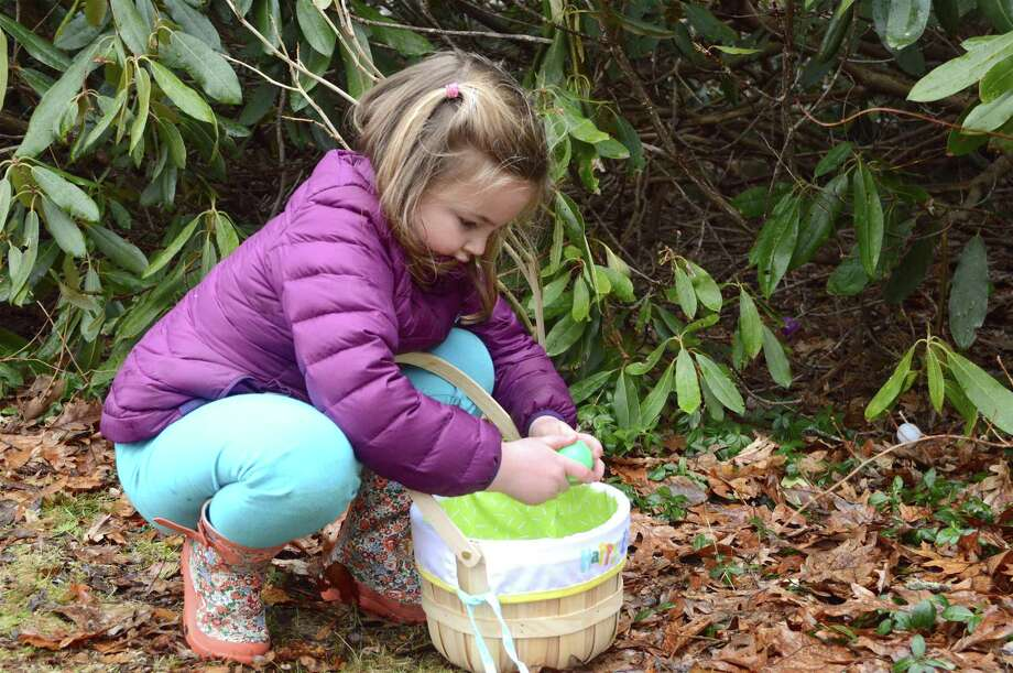 Ainsley Taliercio, 5, of New Canaan, takes a closer look at a find at the annual egg hunt at the New Canaan Nature Center, Thursday, March 29, 2018, in New Canaan, Conn. Photo: Jarret Liotta / For Hearst Connecticut Media / New Canaan News Freelance