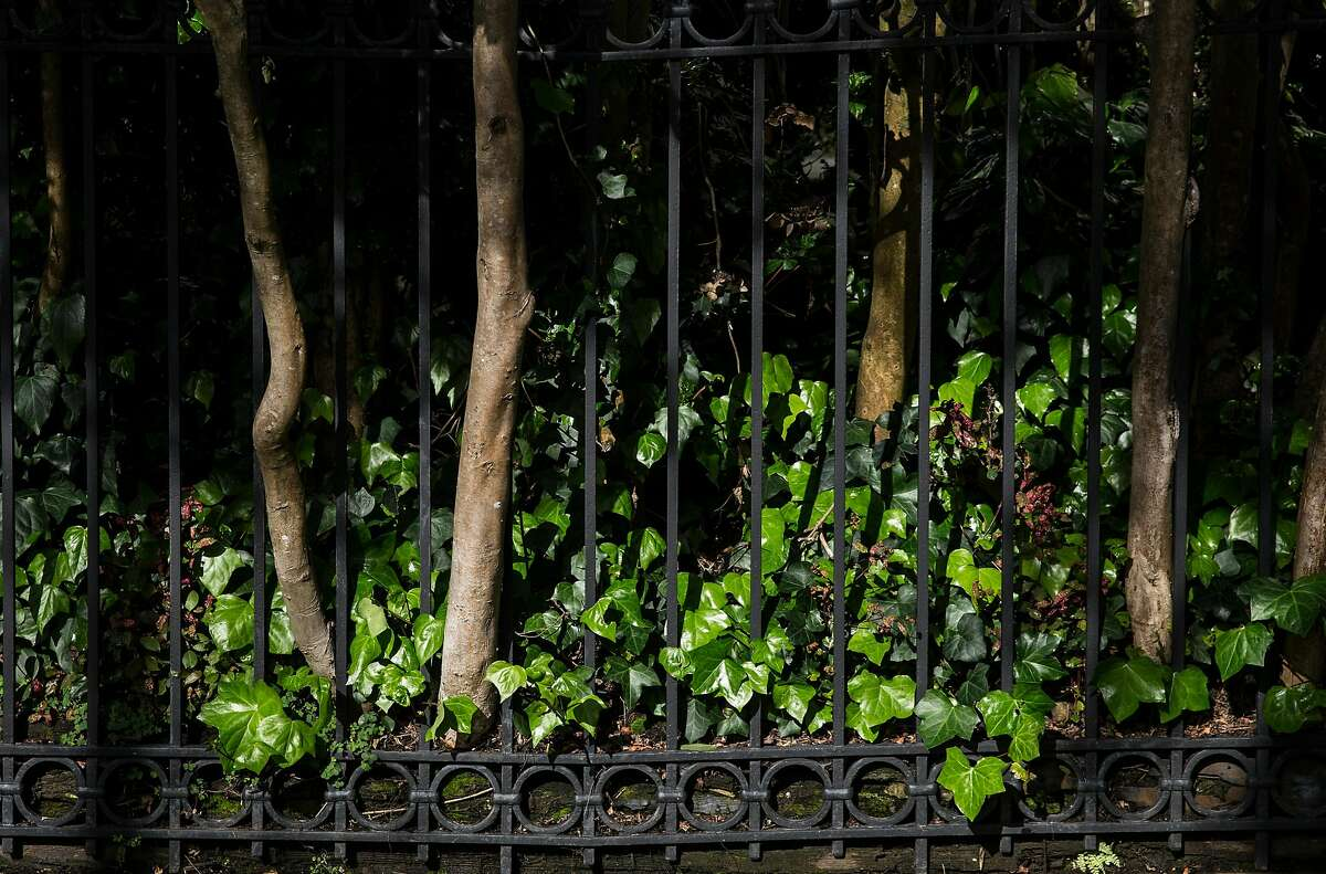 Freshly watered greenery peeks through the fence of a home at 1 Presidio Terrace seen Tuesday, April 3, 2018 in San Francisco, Calif.