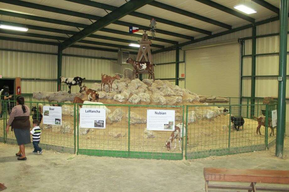 "The ""goat mountain"" in the Buckalew Ag Knowledge Educational Exhibit Building is always a favorite at the Montgomery County Fair."