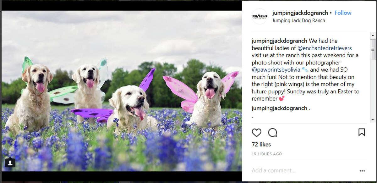 Instagram screengrab / @enchantedretrievers, @jumpingjackdogranch