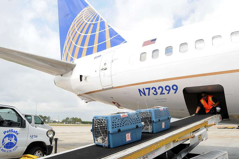 United's has new rules around breeds accepted for travel in the cargo hold. (Dave Rossman Photo) Photo: Dave Rossman, For The Chronicle