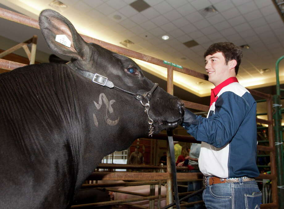 Jakob Dunn of Splendora FFA visits with his grand champion steer before the Montgomery County Fair & Rodeo Junior Livestock Auction at the Lone Star Convention & Expo Center on Wednesday, April 5, 2017. Dunn's steer sold for $40,000. Photo: Jason Fochtman, Staff Photographer / © 2017 Houston Chronicle