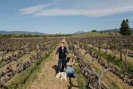 Michael and Stephanie Honig check on growth at a vineyard at the Honig Winery in Rutherford, Calif., April 2, 2018.  China�s selection of wine as a target of retaliatory tariffs is a gut punch for the Honigs and other California vintners who have worked hard to cultivate the mushrooming legions of young, recently wealthy Chinese as a key market. (Jason Henry/The New York Times)