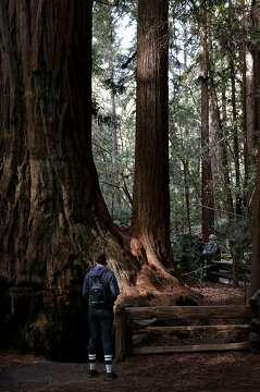 the 5 best spots around santa cruz to see redwoods sfchronicle com