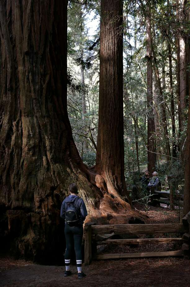 Visitors peek inside the Fremont Tree, a redwood that you can stand inside, at Henry Cowell Redwoods State Park, one of the 40-some state parks where the Save the Redwoods League is offering free admission on the second Saturday of each month this year. Photo: Preston Gannaway / Special To The Chronicle