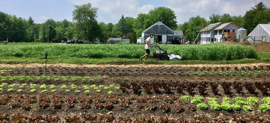 Daniel Mays, a 2006 graduate of Wesleyan University in Middletown, owns and operates a 14-acre farm in Scarborough, Maine. Photo: Contributed Photo