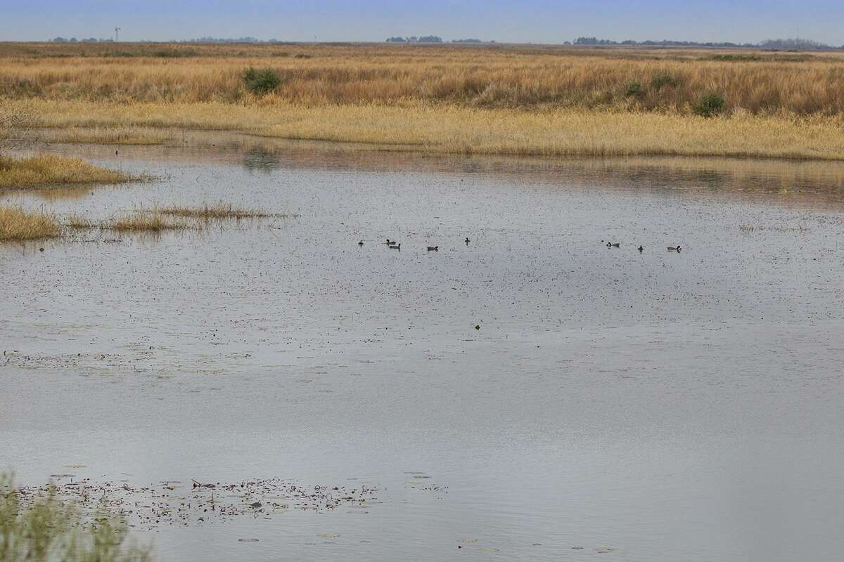 The Attwater Prairie Chicken Refuge near Sealy will host the Booming-N-Blooming festival with tours the refuge, programs and possible sightings of the endangered Attwaters prairie-chicken.