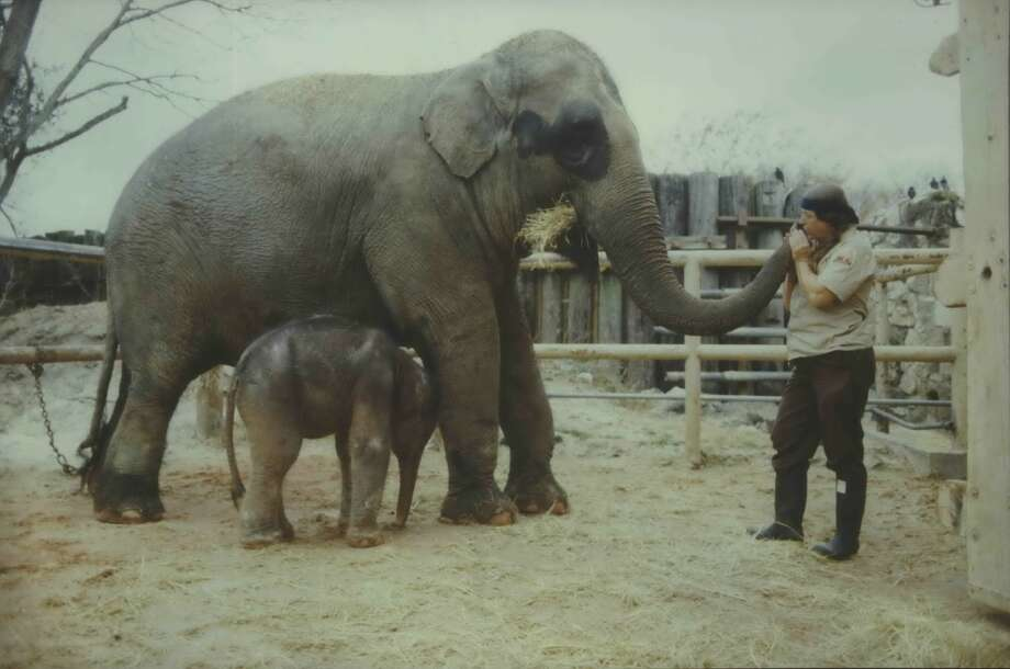 PHOTOS: Vintage photos of the Houston Zoo Just as the Houston Zoo announces new things to come for its 100th anniversary, look back at the landmark's early days. See more photos from the zoo's lengthy history... Photo: File