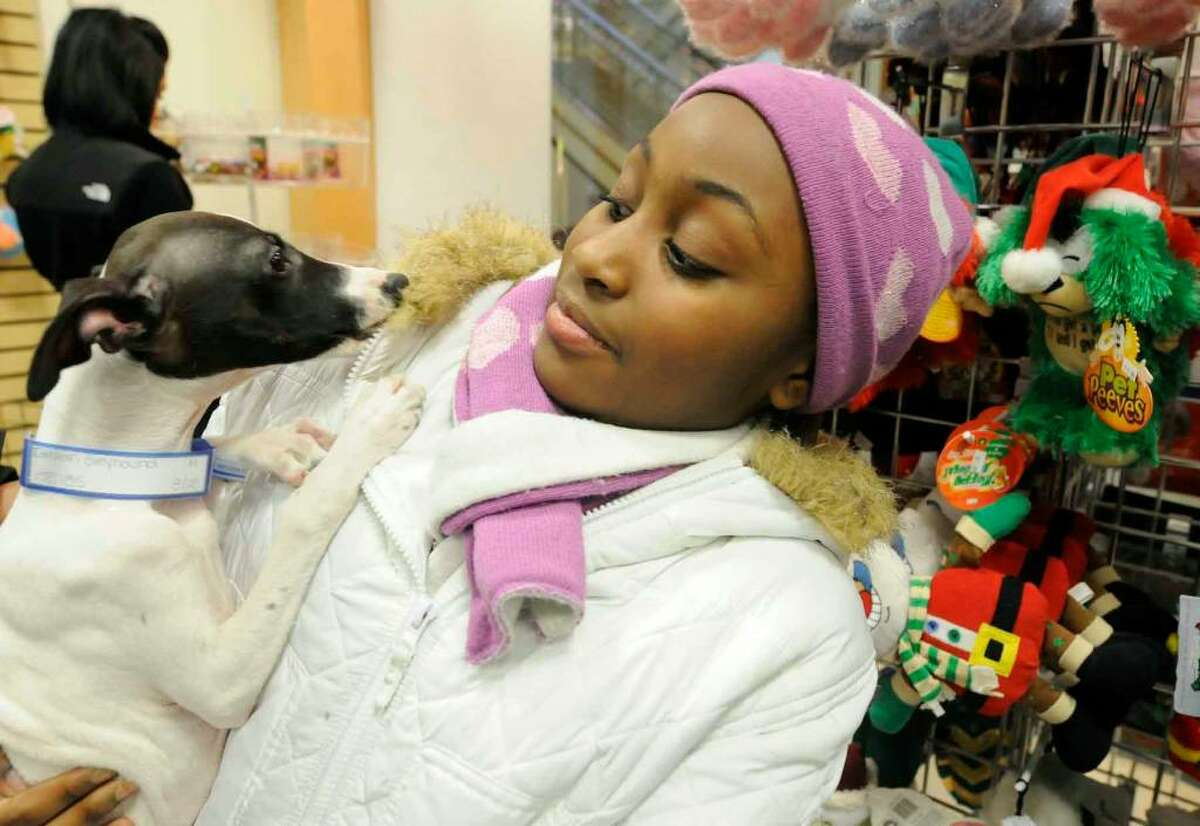 Nine-year-old Imani Reid visits with an Italian Greyhound in The Pet Company while shopping with her grandmother Saturday at the Colonie Center in Colonie (Michael P. Farrell/Albany Times Union)
