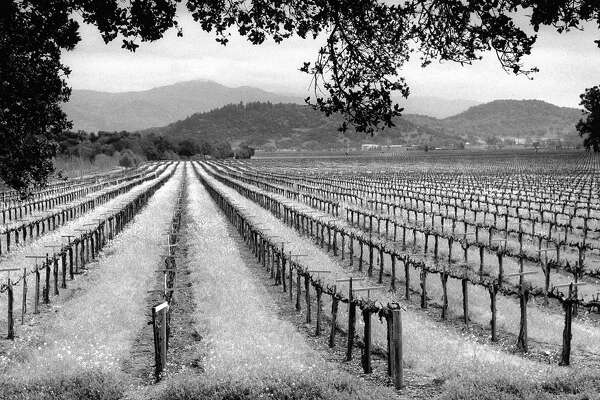 Battle for Napa Valley's future: Proposed curb on vineyards