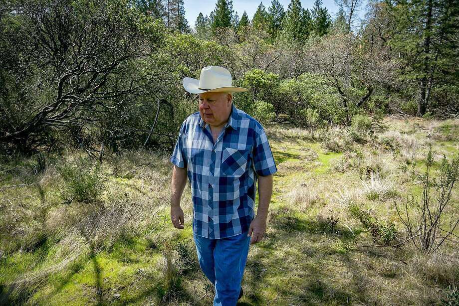 Mike Davis wants to plant 10 acres of grapevines on Howell Mountain in Angwin next to Wild
