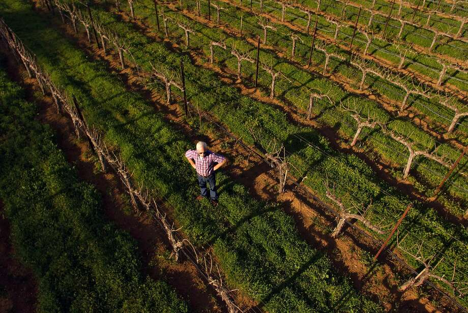 Randy Dunn with his dog, Dominga at his vineyard in Napa, Calif., on Monday, April 2, 2018. There is growing debate in Napa over vineyard development, centered around an upcoming ballot initiative in which voters will decide whether to limit further vineyard plantings in the agricultural watershed, especially where there are forests. Dunn owns Dunn Vineyards on Howell Mountain, and also purchased a major nature preserve nearby called Wildlake, which he has donated to the Land Trust. He is in favor of the ballot initiative and strongly opposes further deforestation. Photo: Carlos Avila Gonzalez / The Chronicle