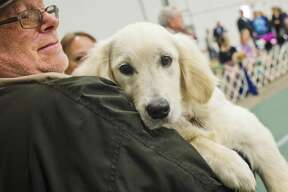 Snowy Mist the Labrador Retriever is held by his owner, Edward Zaremba of Vasser, during the Saginaw Valley Kennel Club dog show on Saturday, April 7, 2018 at the Birch Run Expo Center. (Katy Kildee/kkildee@mdn.net)
