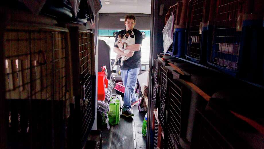 Miller Friedman carries puppies to be transported as Houston PetSet and other animal organizations loaded several hundred cats and dogs found during Hurricane Harvey onto a custom bus to be transported from the Montgomery County Animal Shelter to various homes in Illinois, Wisconsin and Minnesota, Saturday, April 7, 2018, in Conroe. Photo: Jason Fochtman, Staff Photographer / © 2018 Houston Chronicle
