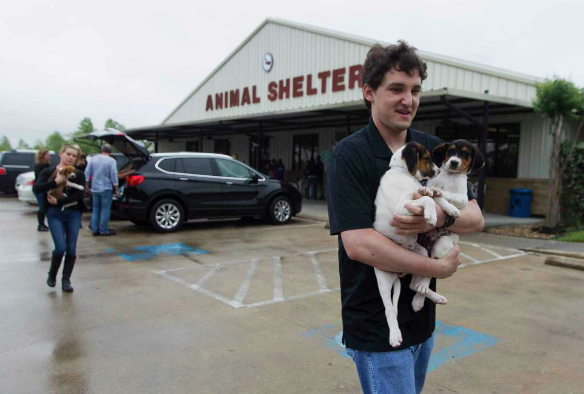 Miller Friedman carries puppies to be transported as Houston PetSet and other animal organizations loaded several hundred cats and dogs found during Hurricane Harvey onto a custom bus to be transported from the Montgomery County Animal Shelter to various homes in Illinois, Wisconsin and Minnesota, Saturday, April 7, 2018, in Conroe.