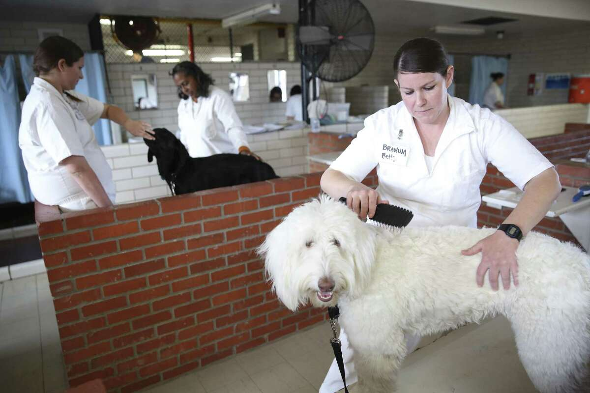 Beth Branum, right, grooms Rocket, a service dog in training, after a demonstration at the Crain Unit. Dogs in the Patriot Paws program, like Rocket, learn to help do laundry and make a bed.