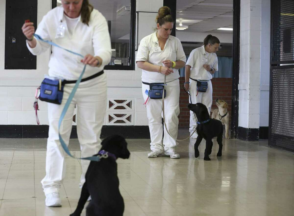 Stacy Brittain, right, and Banner, the service dog she's training, join other Patriot Paws participants and pups at a training event.