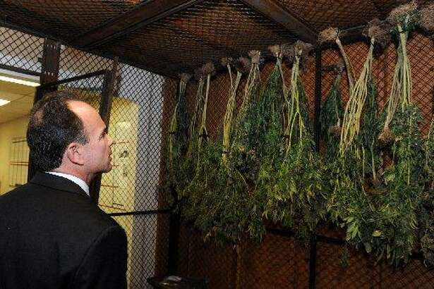 "Mayor Joe Ganim looks at confiscated marijuana plants that were part of major cache of drugs and guns seized in a raid by the Violent Crime Reduction Task Force in Bridgeport, Conn. Feb. 2, 2016. On Monday, April 9, 2018, Ganim announced that he supported the legalization of recrational mariijuana. ""A legal regulated recreational marijuana industry would launch a new industry in Connecticut, create thousands of new jobs, and produce hundreds of millions of needed annual tax revenue for the state,"" said Ganim, who is running for Democratic nomination for governor."