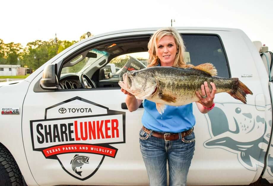 Female angler Stacy Spriggs caught a 13.06 pound, 27 inch lunker on March 31, 2018. The Huntsville woman told Texas Parks and Wildlife that the biggest fish she caught previously was a 9.71 pound bass.Scroll ahead to see more monster-sized fish that have been caught in Texas.  Photo: Texas Parks And Wildlife