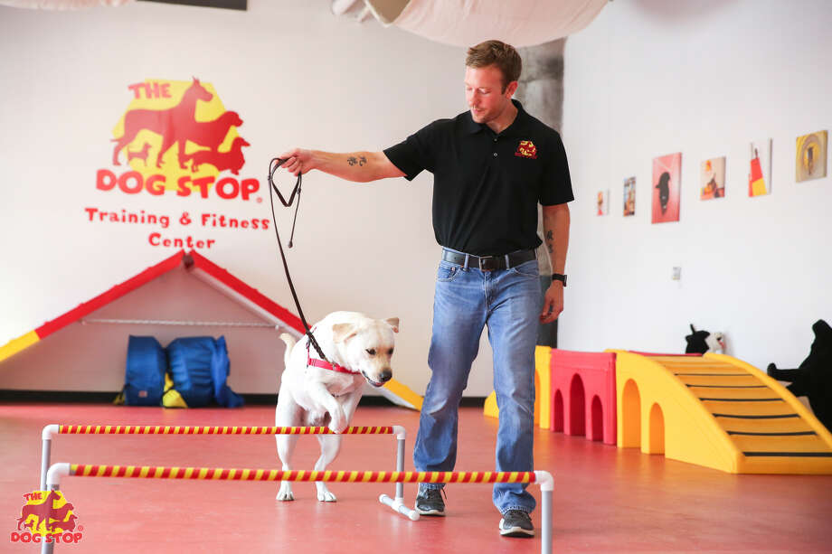 The Dog Stop, a dog care franchise, is opening its first Houston-area location in The Woodlands.