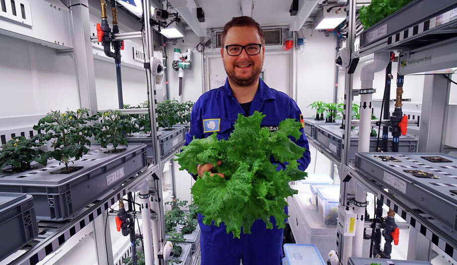 German aerospace center (DLR) engineer Paul Zabel shows off fresh salad he harvested in the EDEN-ISS greenhouse at the Neumeyer-Station III on Antarctica Photo: DLR/via AP