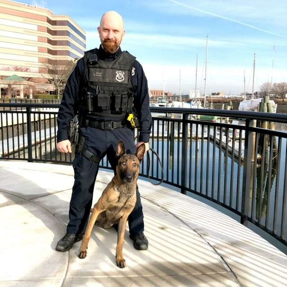 Dog handler Logan Pavia with Loki, a three-year-old Belgian Malinois, who has lost nearly all of his eyesight and is being forced into an early retirement. Police officers are raising money for his future vet and food bills by selling tee shirts for $20. Photo: Stamford Police / Contributed