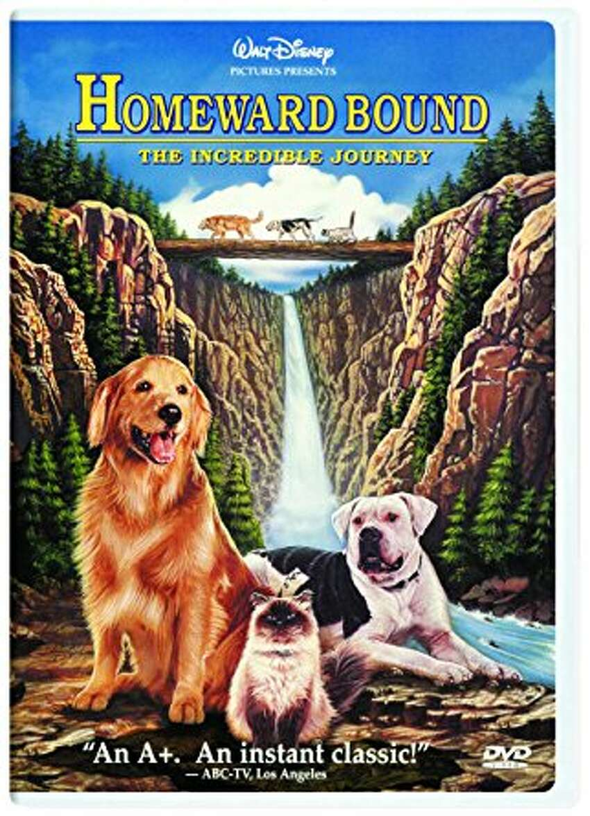 Homeward Bound (1993) This movie about a cat and dog taking a journey to find their owners will bring a tear to any 90s kid.