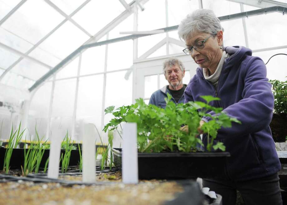 Greenwich resident Ann Shifman-Deibler and Greenwich Land Trust Conservation Educator Dean Fausel tend to parsley during the Greenhouse & Garden Volunteer Session at the Greenwich Land Trust in Greenwich, Conn. Tuesday, April 3, 2018. Despite the layer of snow in the garden, there was still plenty of work to be done in the greenhouse planting seeds and prepping plants to be moved outside. Photo: Tyler Sizemore / Hearst Connecticut Media / Greenwich Time