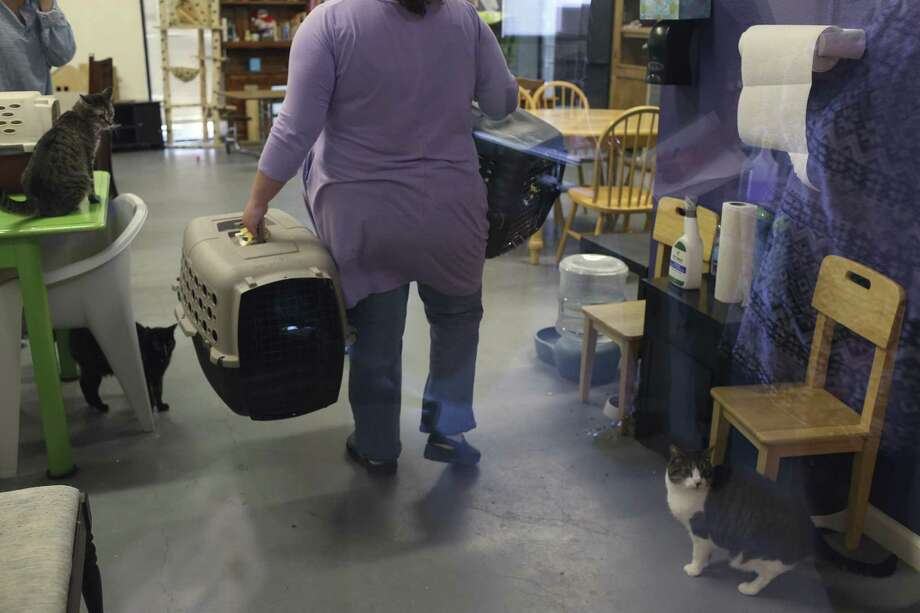 Volunteers prepare to take 10 cats from San Antonio Cat Cafe to a veterinary clinic for immunizations, Tuesday. Photo: Jerry Lara /San Antonio Express-News / © 2018 San Antonio Express-News