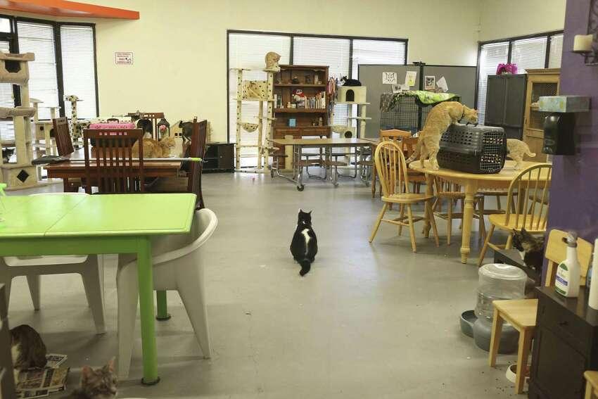 9. San Antonio Cat Cafe: 10458 Sentinel Street