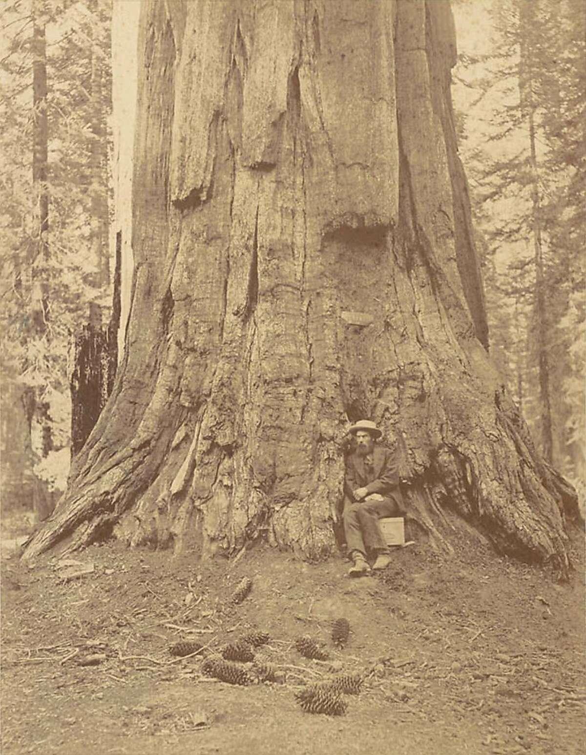 English photographer Eadweard Muybridge at the base of the�General Grant tree in Mariposa Grove in 1872.