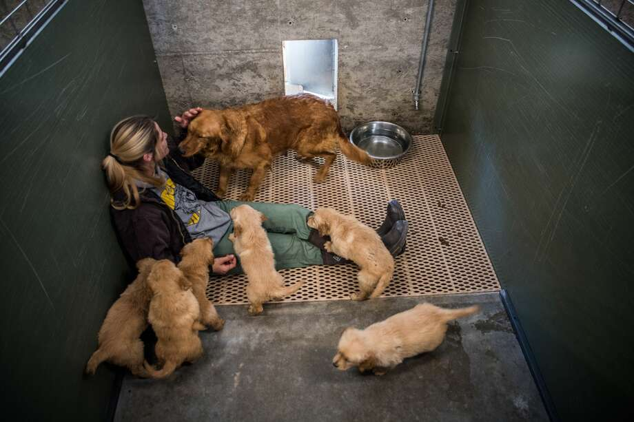 Dog rescuers, flush with donations, buy animals from the