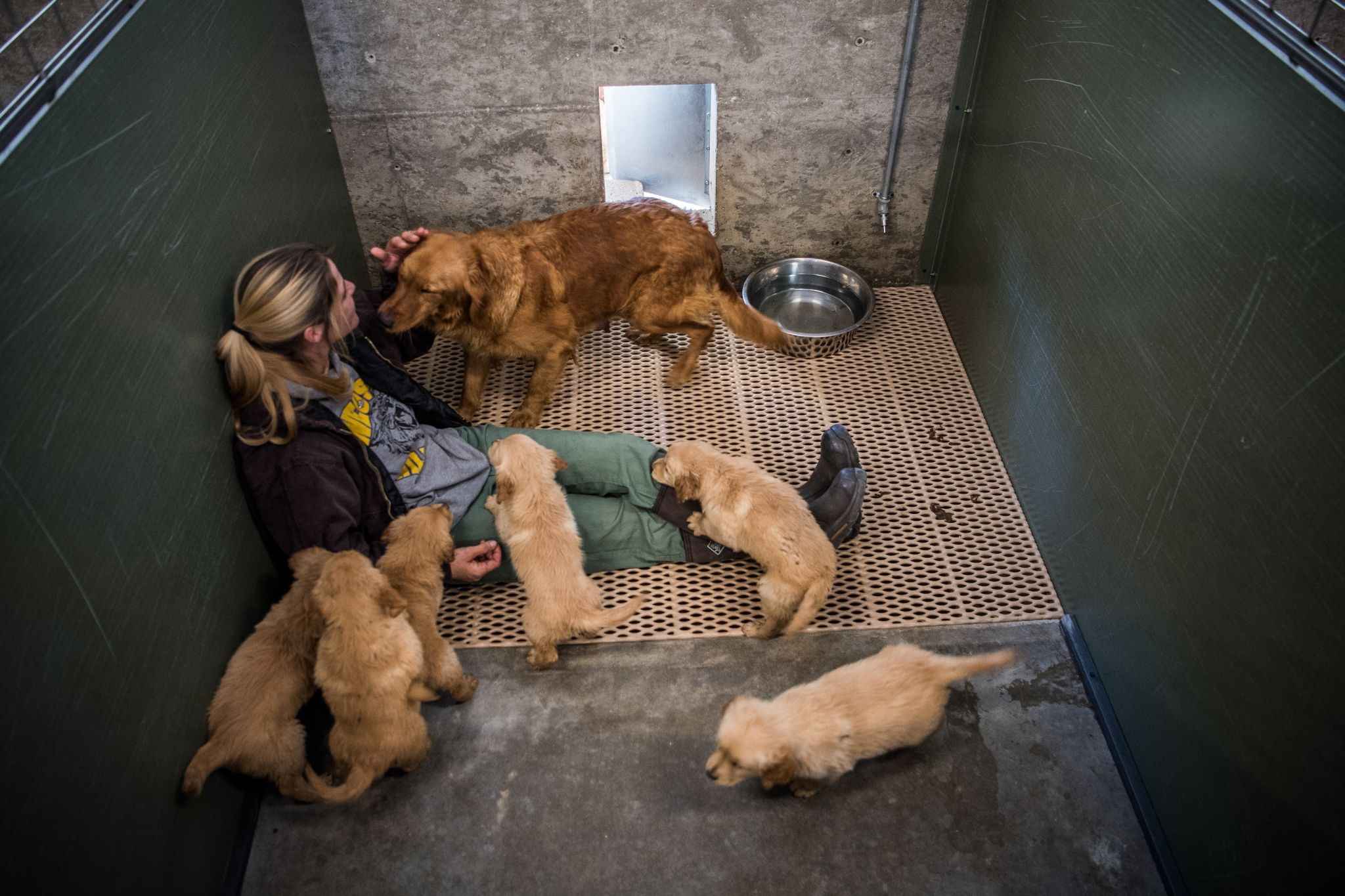 Dog rescuers, flush with donations, buy animals from the breeders