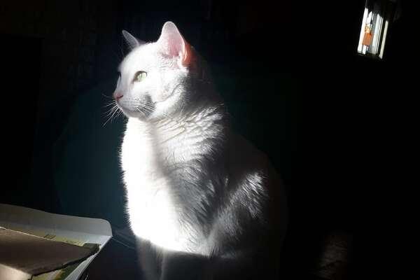 Pets remembered:Armando di Blanco