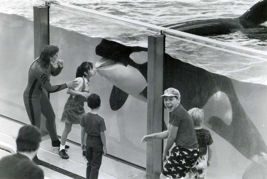 Celina Gonzales, 6, receives a kiss from Shamu while others look on on SeaWorld San Antonio's opening day April 15, 1988. Photo: File Photo / Express-News / San Antonio Express-News