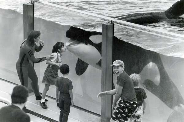 Celina Gonzales, 6, receives a kiss from Shamu while others look on on SeaWorld San Antonio's opening day April 15, 1988.