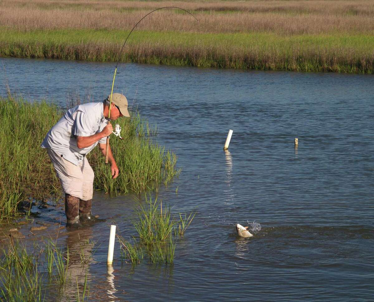 Predator fish, such as the redfish angler Todd Steele battles, gravitate to the bayous and other waterways veining forage-rich coastal estuaries to take advantage of shrimp and small finfish carried and concentrated by tidal movement.