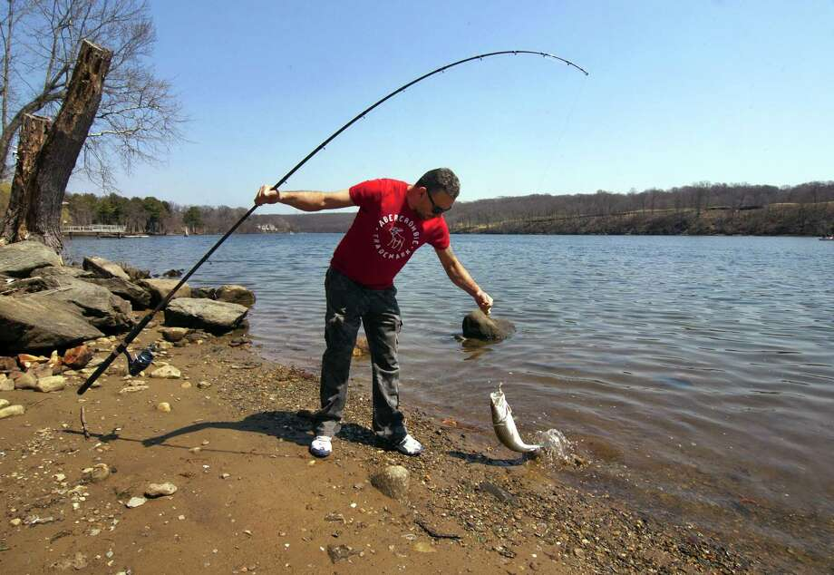 Joziano Desilva, of Danbury, pulls in a striped bass during the opening day of fishing, at Southbank Park along the Housatonic River in Shelton, Conn., on Saturday Apr. 14, 2018. Photo: Christian Abraham / Hearst Connecticut Media / Connecticut Post