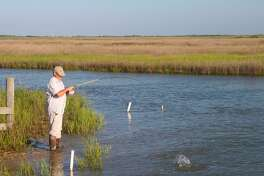 Predator fish such as the redfish angler Todd Steele battles gravitate to the bayous and other waterways veining forage-rich coastal estuaries to take advantage of shrimp and small finfish carried and concentrated by tidal movement.