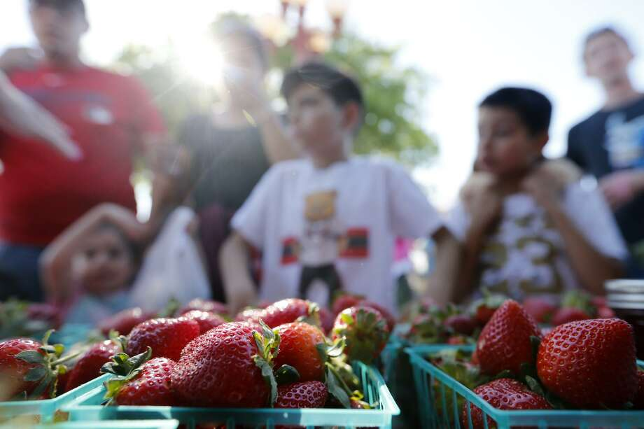 People wait in line to buy strawberries from the Sanchez Family Farm booth during the 71st annual Poteet Strawberry Festival held Sunday April 15, 2018 in Poteet, Tx. Photo: Edward A. Ornelas, Staff / San Antonio Express-News / © 2018 San Antonio Express-News
