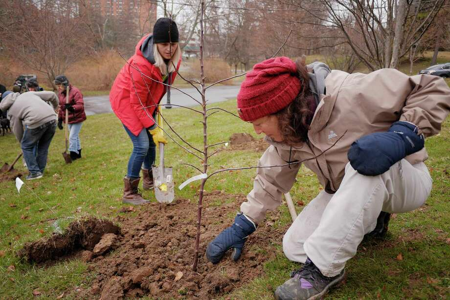 Emily Harris, left, event planner for Nine Pin Ciderworks, and Jill Malouf of Albany, plant an apple tree during the Nine Pin Ciderworks apple tree planting party for its urban orchard project at Washington Park on Sunday, April 15, 2018, in Albany, N.Y. The trees were provided by Kinderhook N.Y.-based Samascott Orchards. The orchard will be comprised of eight unique apple varieties that flourish in New York State.   (Paul Buckowski/Times Union) Photo: PAUL BUCKOWSKI / (Paul Buckowski/Times Union)