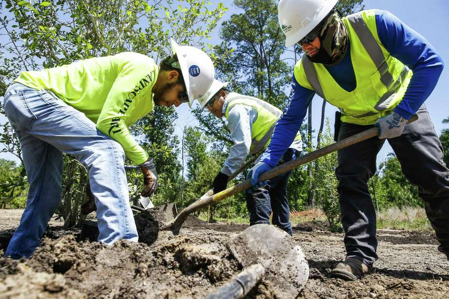 "Landscape Art Inc. tech hand Andrew Woodson, left, an American, and H-2B visa tech hands Marco Atrisco, center, and Olegario Molina, right, plant trees in the eastern glades of Memorial Park Wednesday, April 11, 2018 in Houston. Landscape Art, which uses about 40 H-2B visas to fill positions almost had their workforce cut in in half when they didn't get visas the first time they applied for them this year. ""If we didn't get the H-2B visits, it means we would have to lay off American workers,"" Landscape Art Inc. vice president Jay Williams said. ""If my workforce has gone from 80 to 40 it means I have to cut back on managers for that workforce."" (Michael Ciaglo / Houston Chronicle) Photo: Michael Ciaglo, Houston Chronicle / Houston Chronicle / Michael Ciaglo"