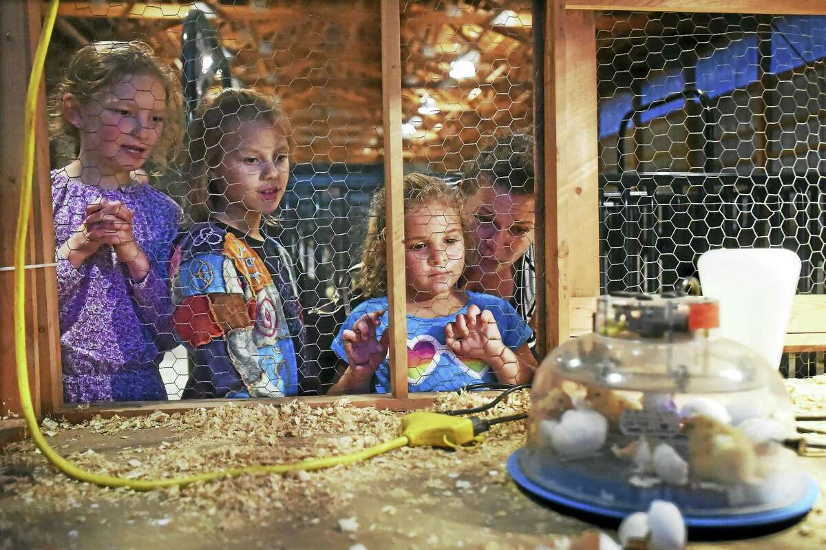 June Lanpher, 8, and her friend Hannah Schults, 8, both of New Haven and Audra Locke, 5, of Branford and her mother Michelle, watch baby chicks hatch in an incubator at the Orange Country Fair.(Catherine Avalone/New Haven Register)