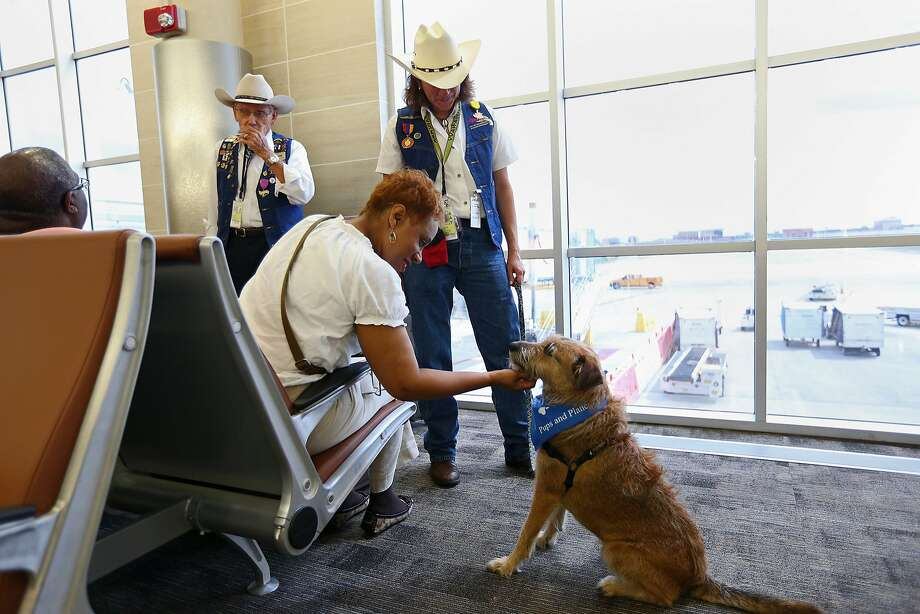 southwest dog travel