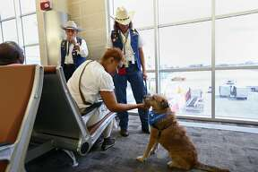"""Memphis, Tennessee resident Edna Williamson pets, """"Whiskers,"""" a mixed-breed dog, at Terminal A of the San Antonio International Airport, Monday, Oct. 14, 2013. The newly implemented program aims to de-stress passengers according to their press release. The dog is part of the airport?•s Pups and Planes program implemented on Monday. The first of its kind in Texas program aims to de-stress passengers. Currently, five dogs are in the program with plans to add more in the future."""