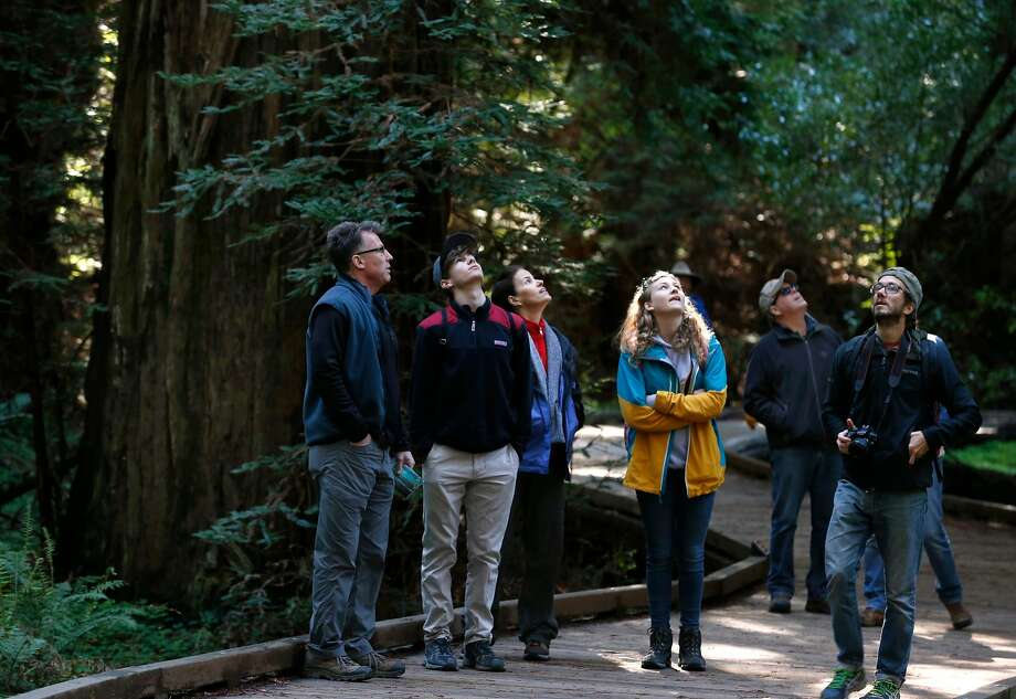 Visitors look up towards the canopy of old-growth redwoods at Muir Woods National Monument. Photo: Paul Chinn / The Chronicle